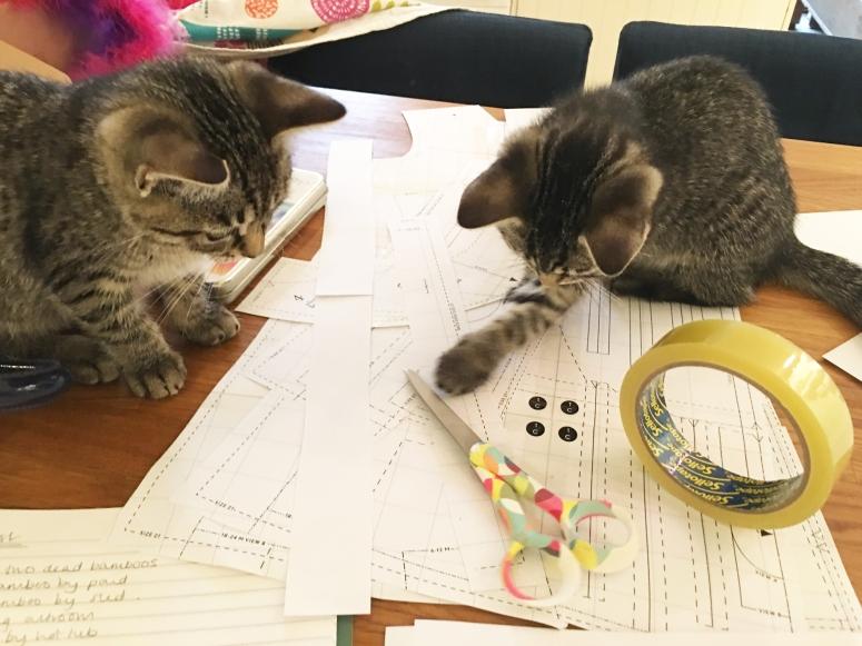 Chalk_Notch_Pony_Tank-kittens